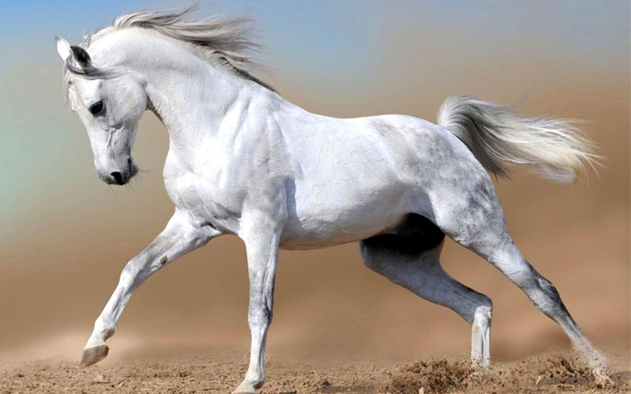 White mare deutsch