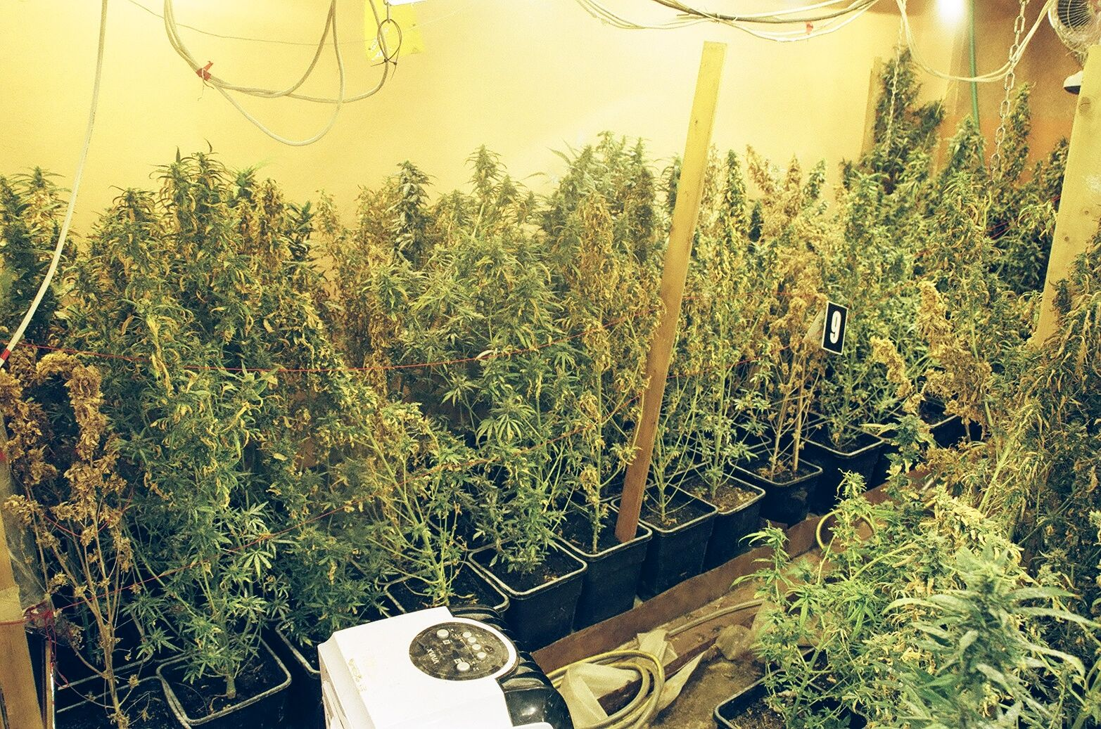 Bosnia: Police Discover Indoor Drug Labs