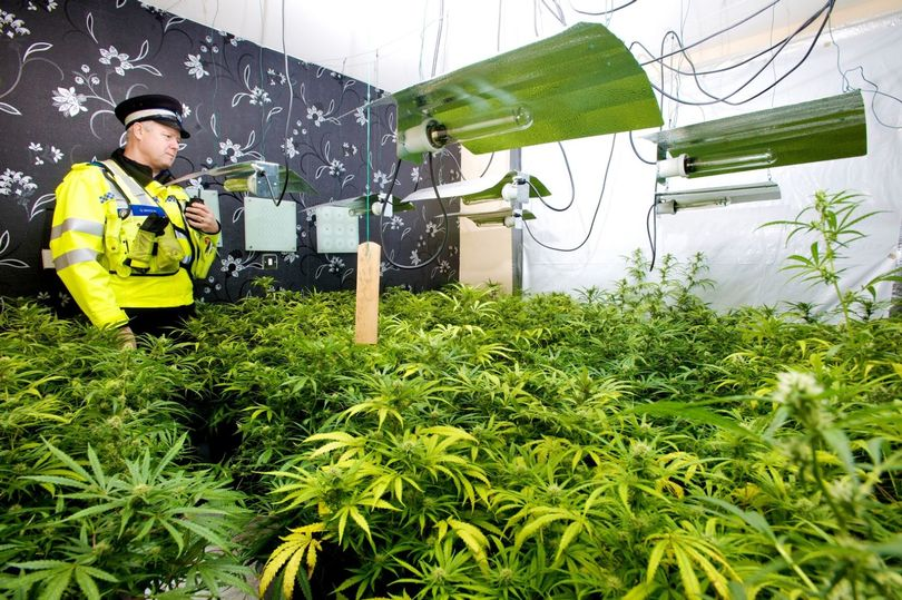 Police-reach-milestone-in-fight-against-cannabis-production