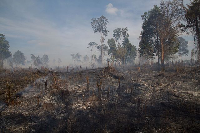 mondulkiri deforestation