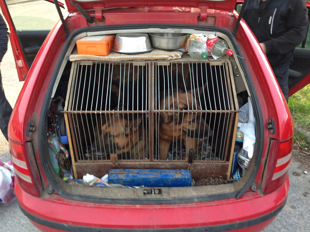 Car-Smuggling-Dogs