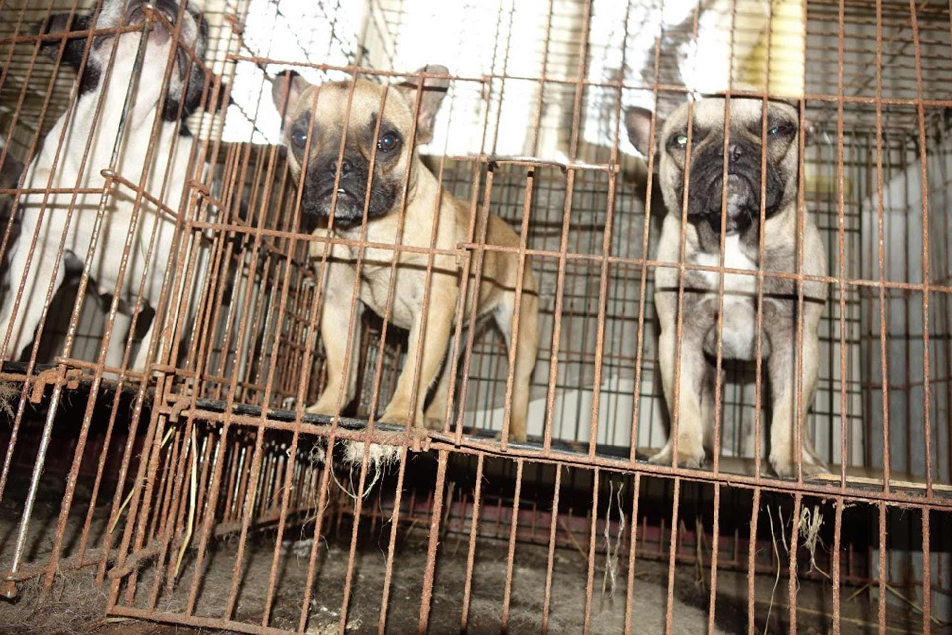 Three puppies in cages