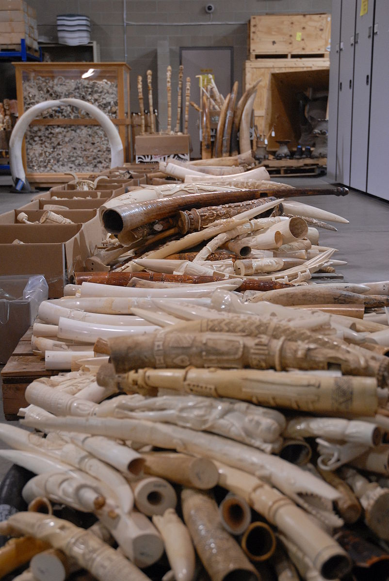 Carved ivory tusk stockpile