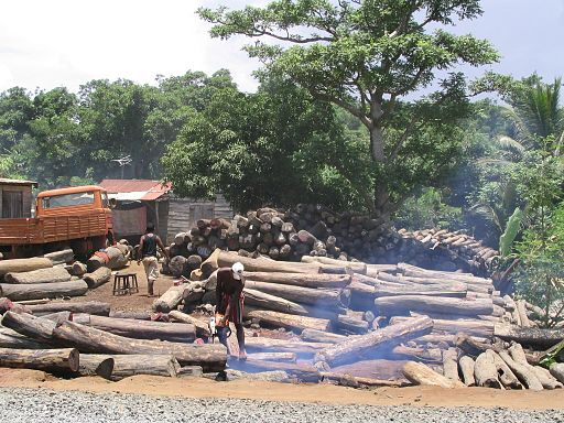 Illegal export of rosewood 001