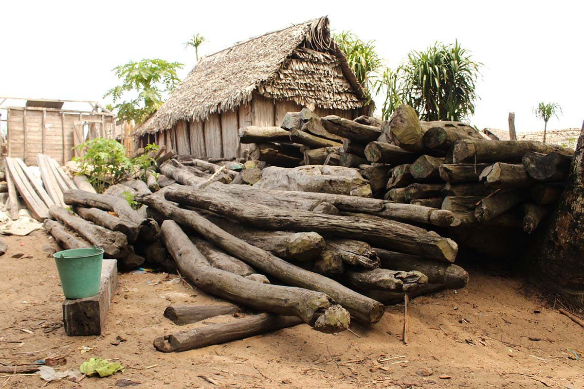 Stockpiled rosewood logs for export in the Sava region of Madagascar. Credit: OCCRP