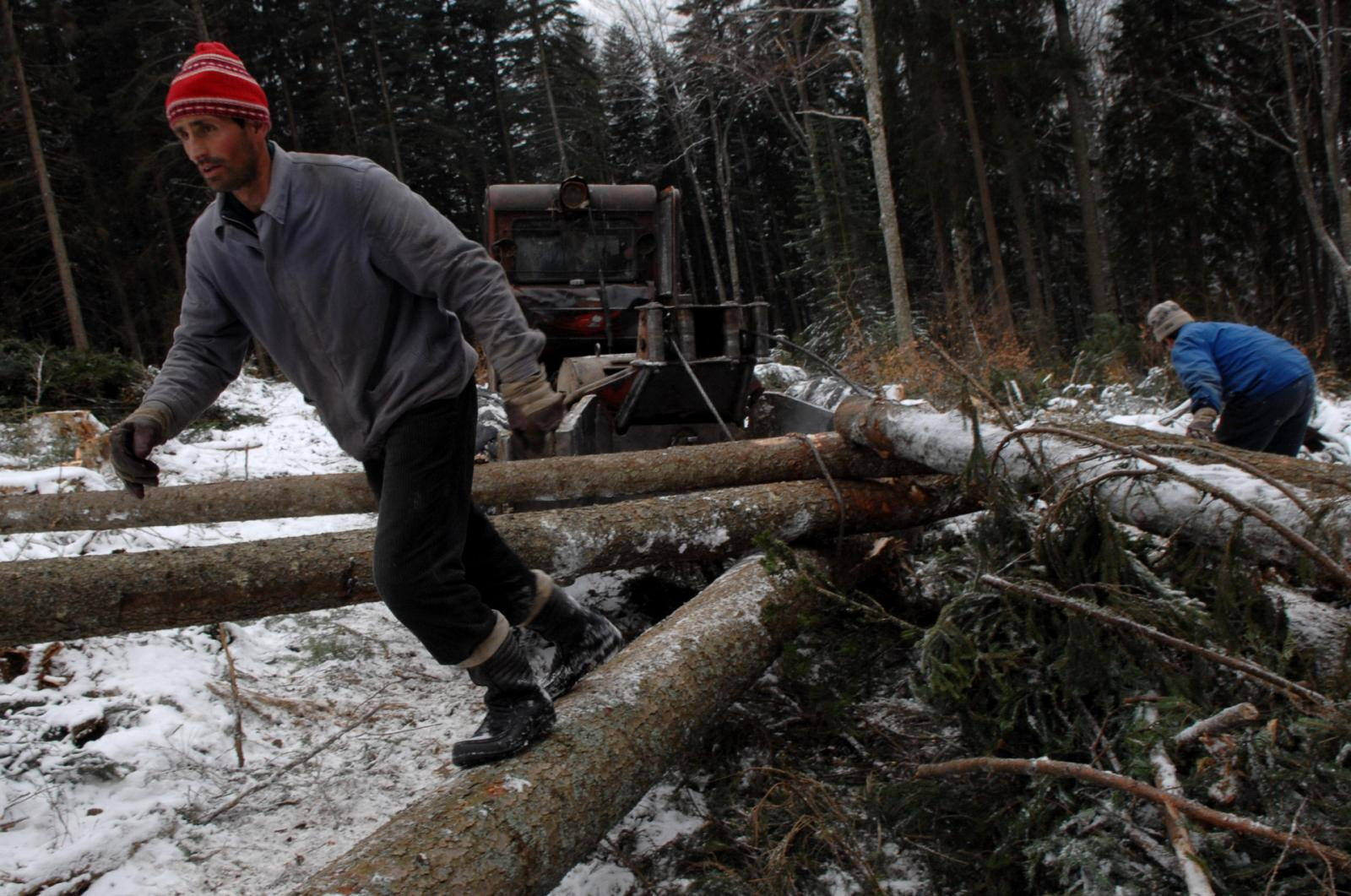 Romanian woodcutters work in the forest of the village of Comandau, Romania (280 km north-west from Bucharest). By The Associated Press